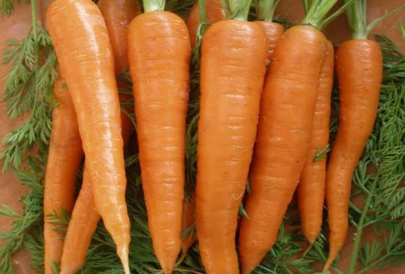 Внос на качествени семена от подбрани производители в Европа